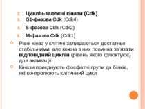 Циклін-залежні кінази (Cdk) G1-фазова Cdk (Cdk4) S-фазова Cdk (Cdk2) M-фазова...