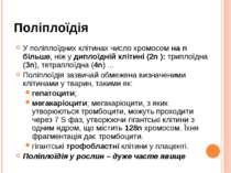 Поліплоїдія У поліплоїдних клітинах число хромосом на n більше, ніж у диплоїд...