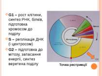 G1 – рост клітини, синтез РНК, білків, підготовка хромосом до поділу S – репл...