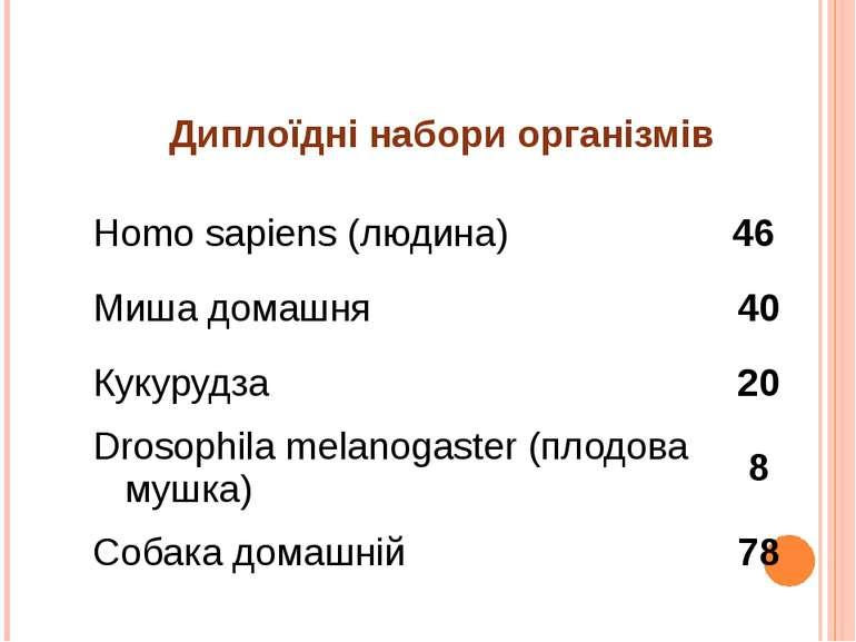 Диплоїднінабориорганізмів Homosapiens(людина) 46 Мишадомашня 40 Кукурудза 20 ...