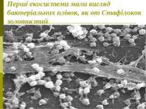 Перші екосистеми мали вигляд бактеріальних плівок, як от Стафілокок золотистий