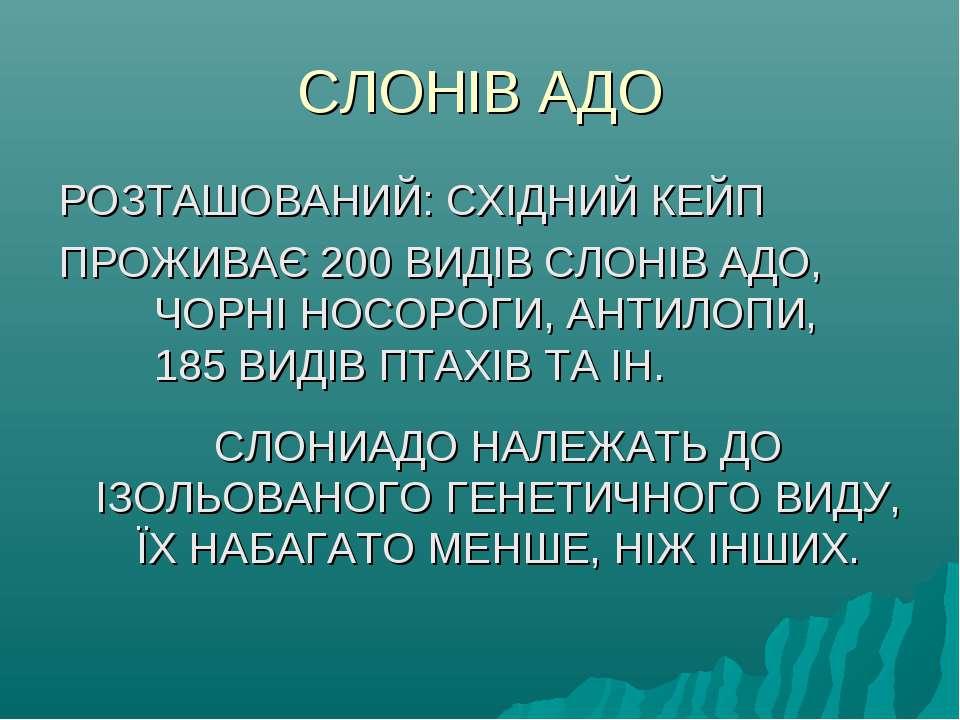 СЛОНІВ АДО РОЗТАШОВАНИЙ: СХІДНИЙ КЕЙП ПРОЖИВАЄ 200 ВИДІВ СЛОНІВ АДО, ЧОРНІ НО...