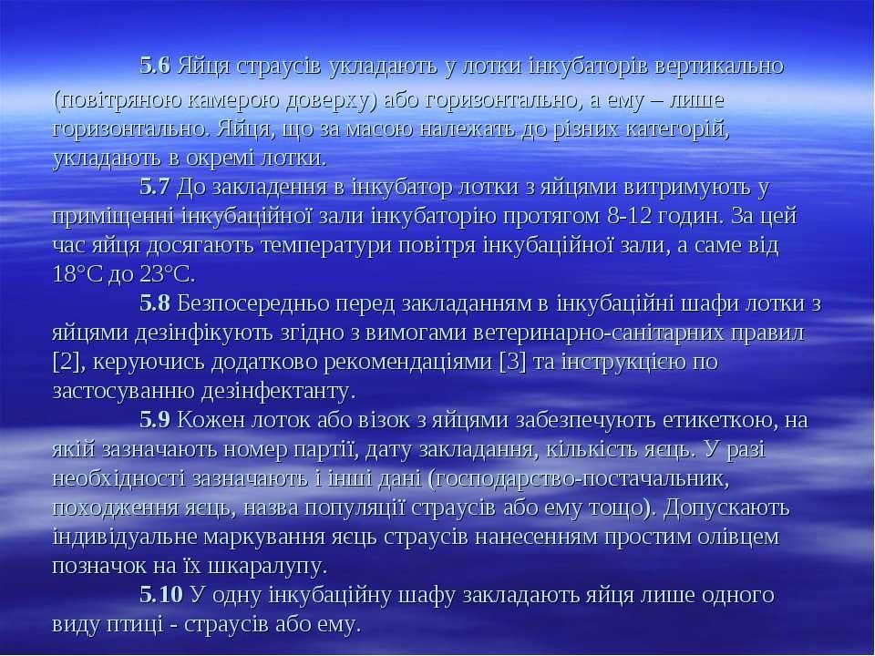 5.6 Яйця страусів укладають у лотки інкубаторів вертикально (повітряною камер...
