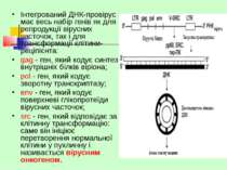 Інтегрований ДНК-провірус має весь набір генів як для репродукції вірусних ча...