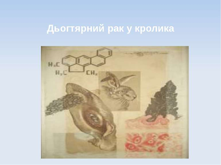 Дьогтярний рак у кролика