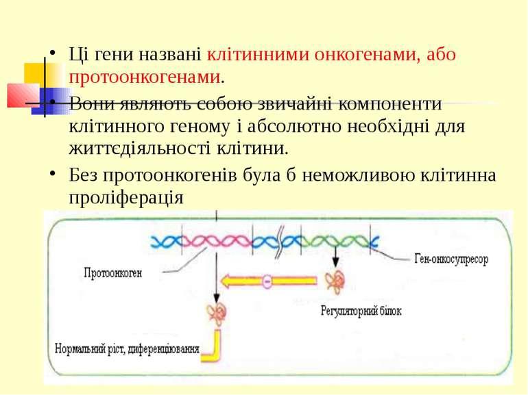 Ці гени названі клітинними онкогенами, або протоонкогенами. Вони являють собо...
