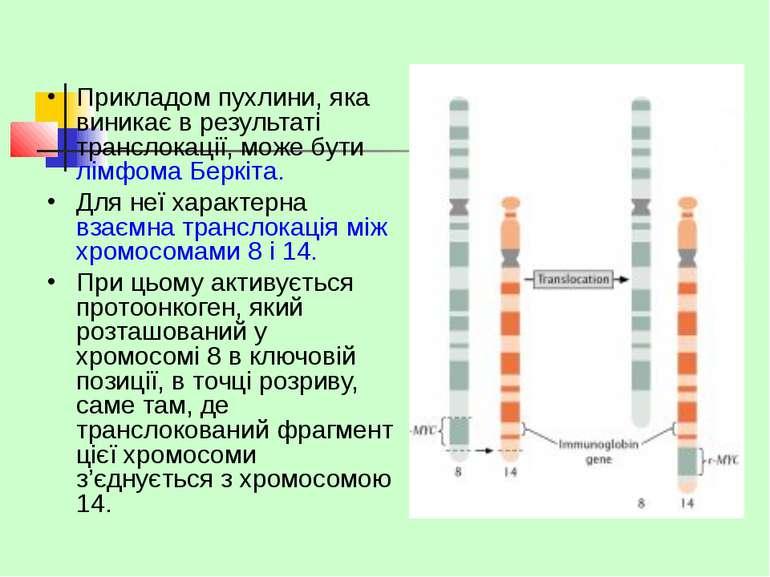 Прикладом пухлини, яка виникає в результаті транслокації, може бути лімфома Б...