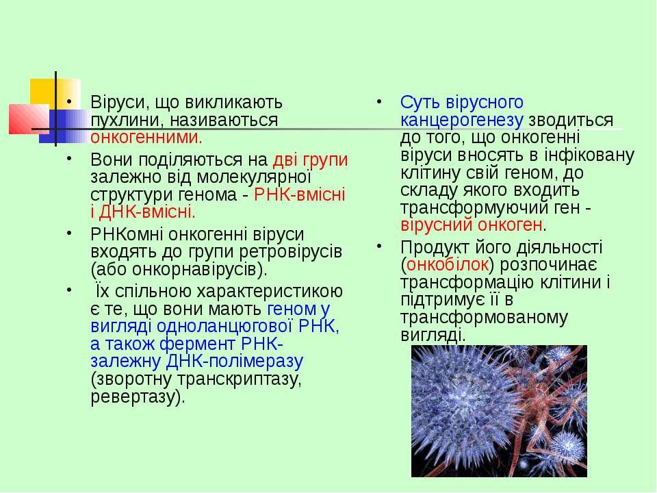 Віруси, що викликають пухлини, називаються онкогенними. Вони поділяються на д...