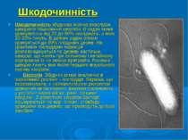 Шкодочинність Шкодочинність збудника значна внаслідок швидкого поширення хвор...