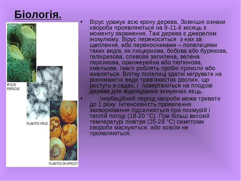 Біологія. Вірус уражує всю крону дерева. Зовнішні ознаки хвороби проявляються...