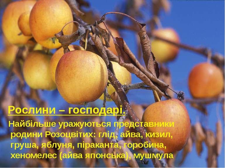 Рослини – господарі. Найбільше уражуються представники родини Розоцвітих: глі...