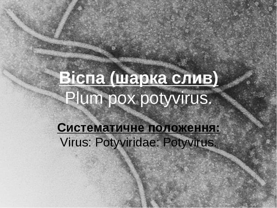 Віспа (шарка слив) Plum pox potyvirus. Систематичне положення: Virus: Potyvir...