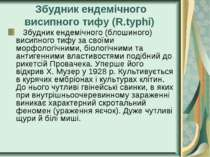 Збудник ендемічного висипного тифу (R.typhi) Збудник ендемічного (блошиног...