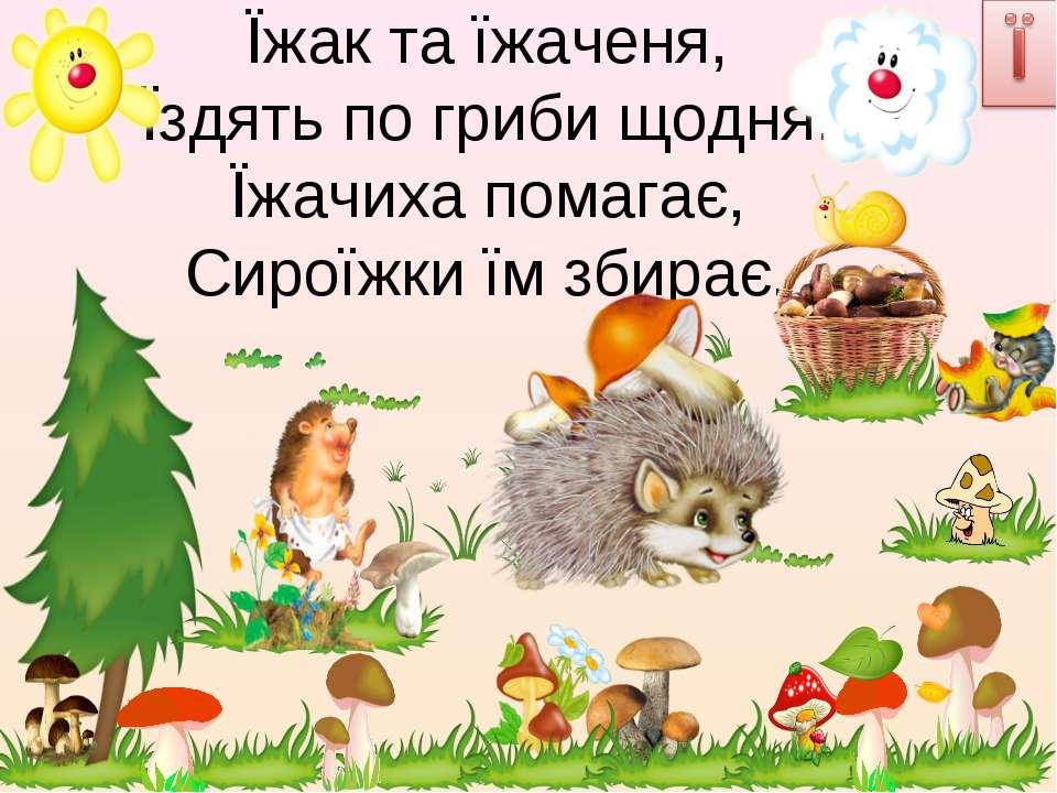 Їжак та їжаченя, Їздять по гриби щодня. Їжачиха помагає, Сироїжки їм збирає.