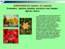 БЛИЗНЮКИ (21 травня - 21 червня) Близнюки - орхідея, троянда, антуріум, мак, ...