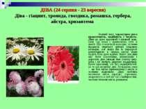 ДІВА (24 серпня - 23 вересня) Діва - гіацинт, троянда, гвоздика, ромашка, гер...