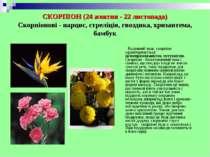 СКОРПІОН (24 жовтня - 22 листопада) Скорпіонові - нарцис, стреліція, гвоздика...
