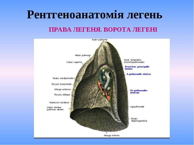 Рентгеноанатомія легень ПРАВА ЛЕГЕНЯ. ВОРОТА ЛЕГЕНІ