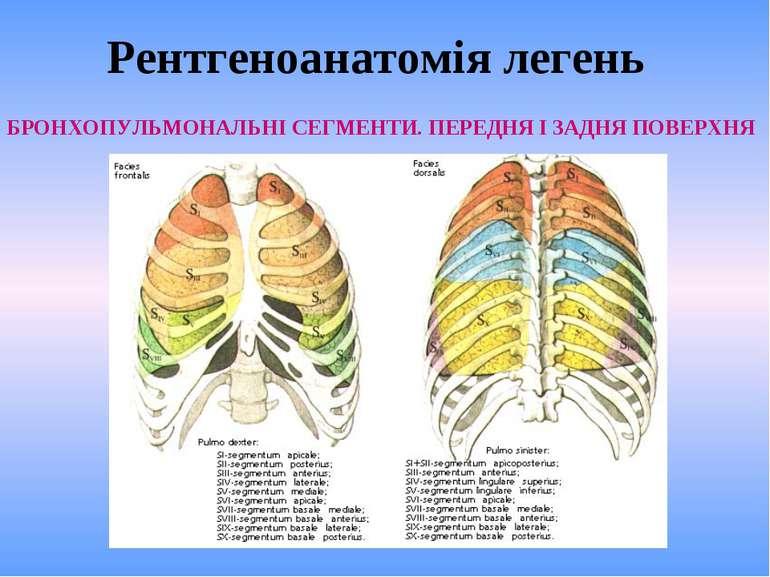 Рентгеноанатомія легень БРОНХОПУЛЬМОНАЛЬНІ СЕГМЕНТИ. ПЕРЕДНЯ І ЗАДНЯ ПОВЕРХНЯ