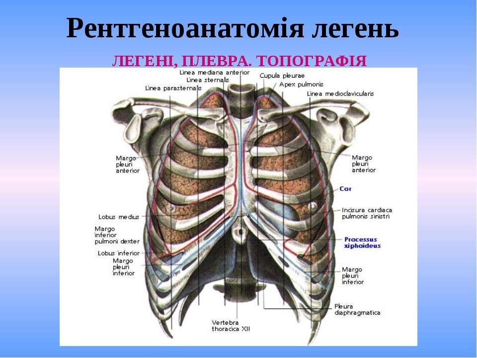 Рентгеноанатомія легень ЛЕГЕНІ, ПЛЕВРА. ТОПОГРАФІЯ