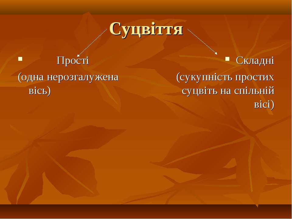 Суцвіття Прості (одна нерозгалужена вісь) Складні (сукупність простих суцвіть...