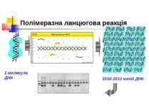 Полімеразна ланцюгова реакція 1 молекула ДНК 1010-1012 копій ДНК