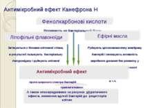 Антимікробний ефект Канефрона Н Впливають на бактеріальний білок Зв'язуються ...
