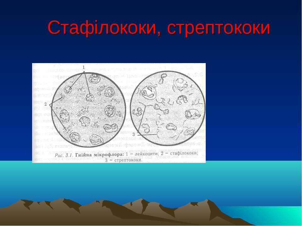 Стафілококи, стрептококи