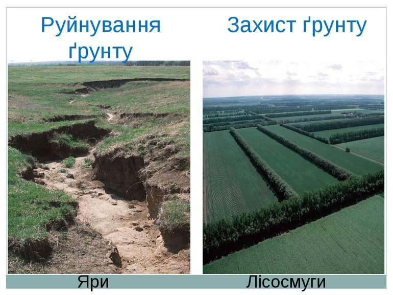 Руйнування ґрунту Захист ґрунту Яри Лісосмуги