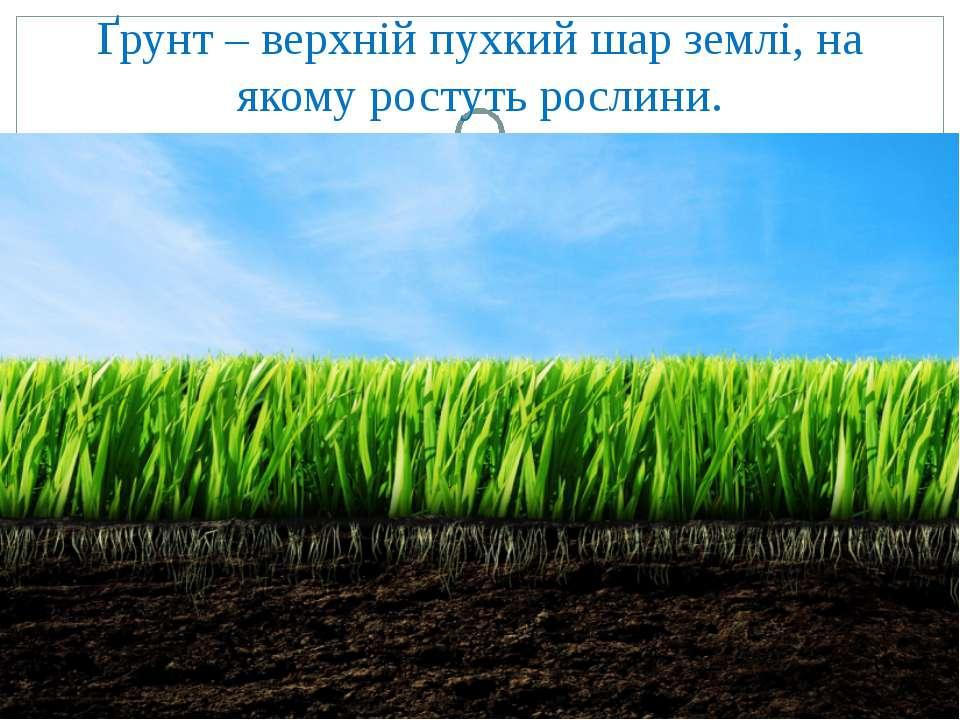 Ґрунт – верхній пухкий шар землі, на якому ростуть рослини.