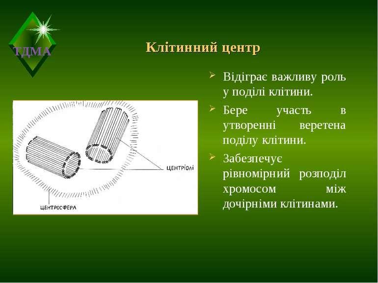 Клітинний центр Відіграє важливу роль у поділі клітини. Бере участь в утворен...
