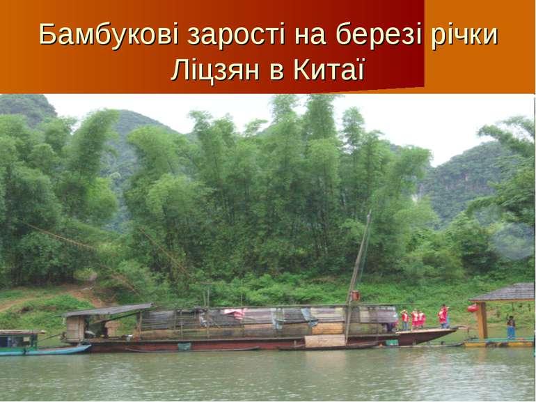 Бамбукові зарості на березі річки Ліцзян в Китаї