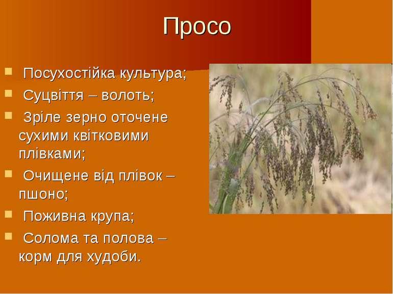 Просо Посухостійка культура; Суцвіття – волоть; Зріле зерно оточене сухими кв...
