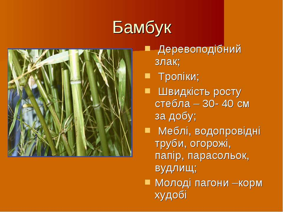 Бамбук Деревоподібний злак; Тропіки; Швидкість росту стебла – 30- 40 см за до...