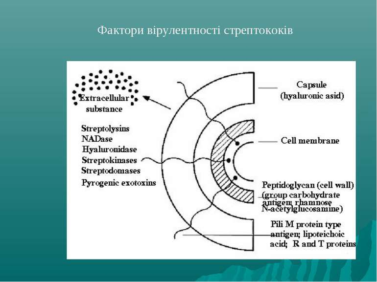 Фактори вірулентності стрептококів