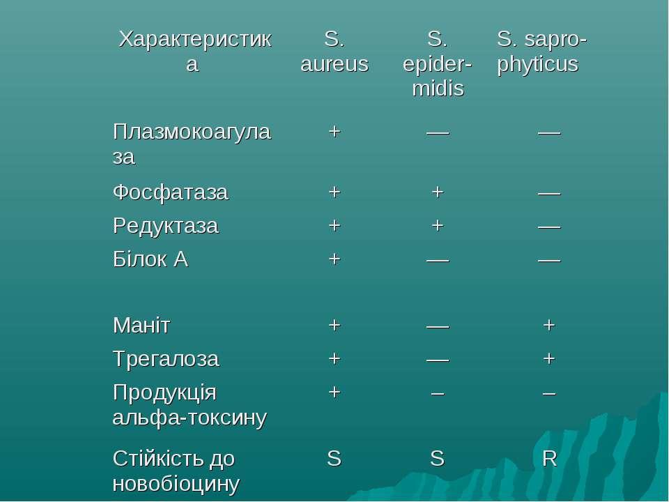 Характеристика S. aureus S. epider-midis S. sapro-phyticus Плазмокоагулаза + ...