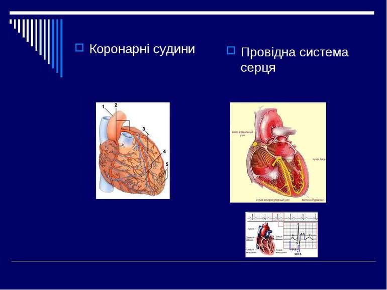 Коронарні судини Провідна система серця