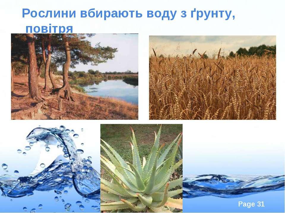 Рослини вбирають воду з ґрунту, повітря Page *