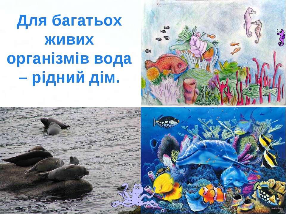 Для багатьох живих організмів вода – рідний дім. Page *