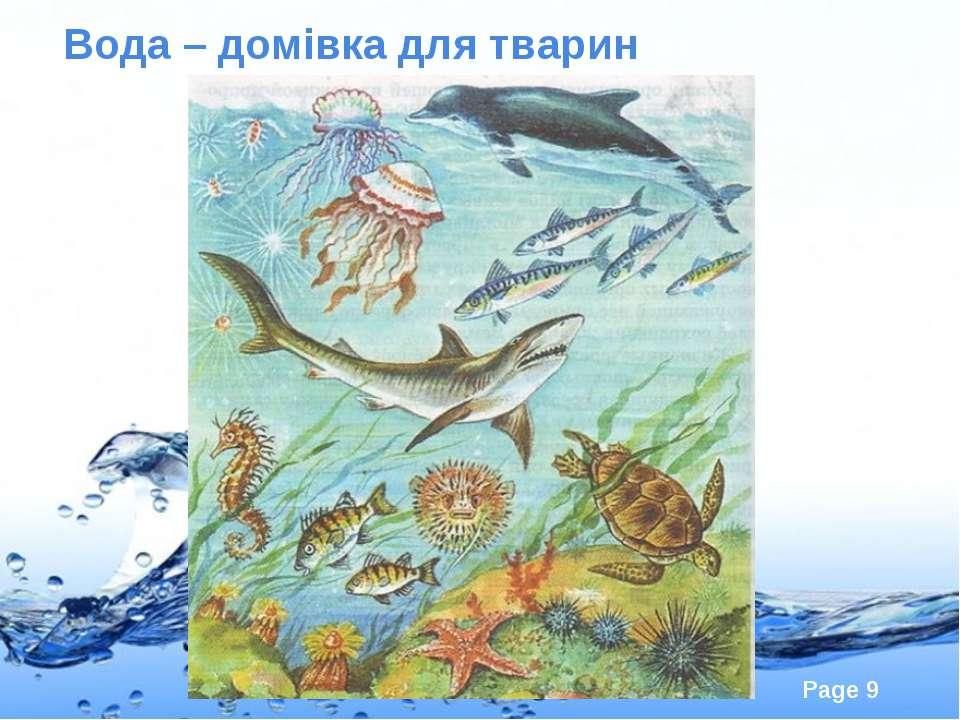 Вода – домівка для тварин Page *