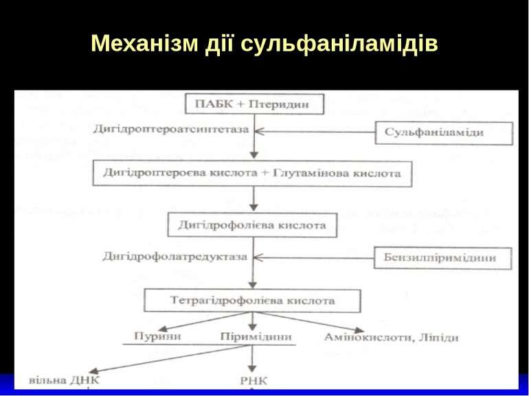 Механізм дії сульфаніламідів