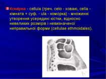 Комірка - сellula (греч. celo - ховаю, cella - кімната + суф. - ula - коморка...