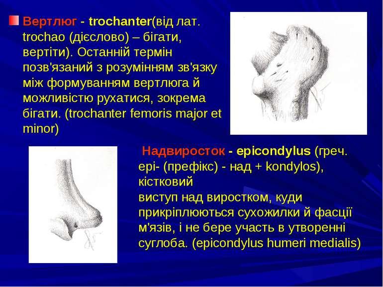 Вертлюг - trochanter(від лат. trochao (дієслово) – бігати, вертіти). Останній...