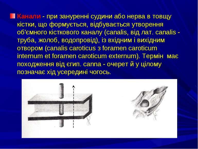 Канали - при зануренні судини або нерва в товщу кістки, що формується, відбув...