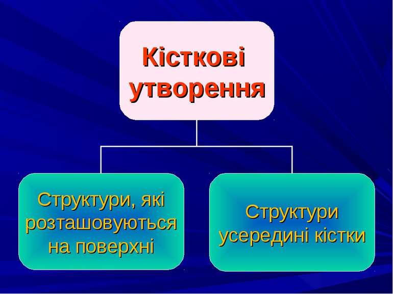 Кісткові утворення Структури, які розташовуються на поверхні Структури усеред...