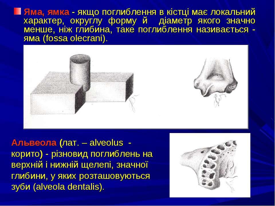 Яма, ямка - якщо поглиблення в кістці має локальний характер, округлу форму й...