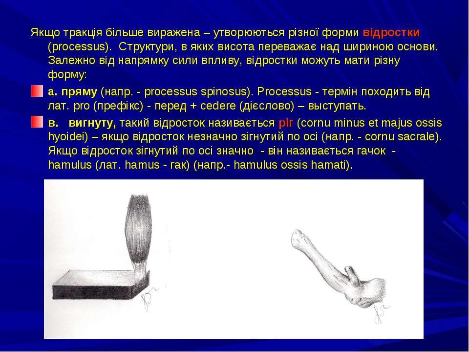 Якщо тракція більше виражена – утворюються різної форми відростки (processus)...
