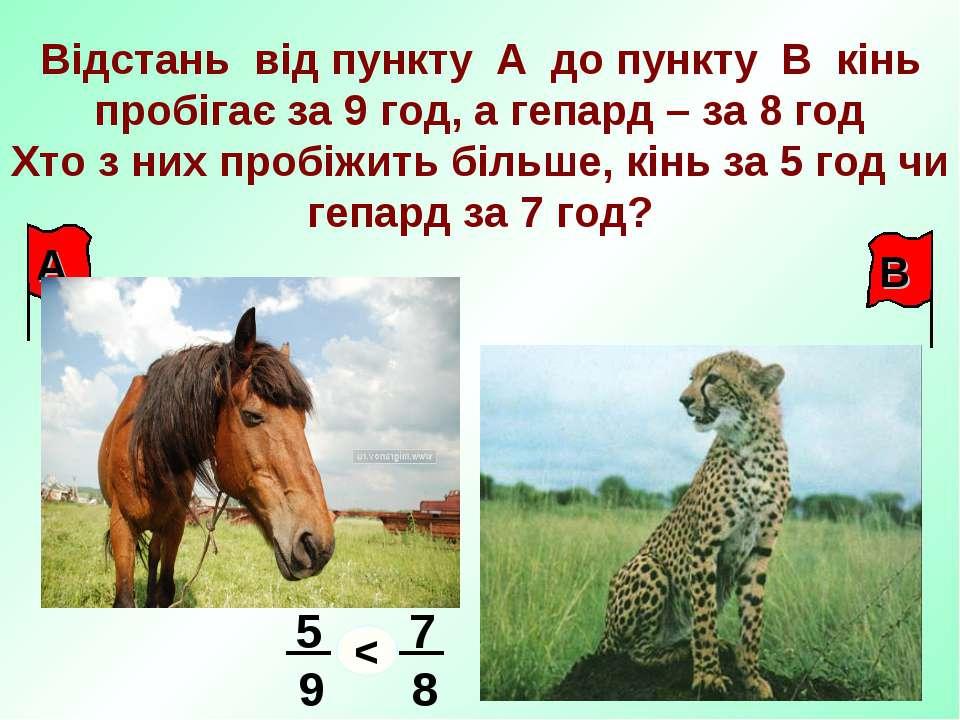 Відстань від пункту А до пункту В кінь пробігає за 9 год, а гепард – за 8 год...