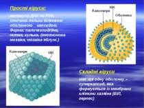 Прості віруси: молекула ДНК чи РНК, оточена тільки білковою оболонкою _ капси...