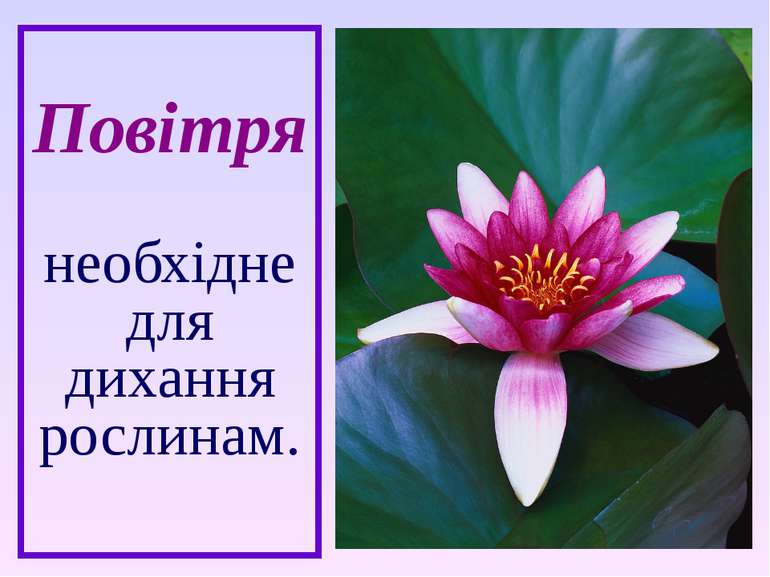 Повітря необхідне для дихання рослинам.